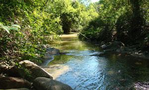 A Leaside waterway