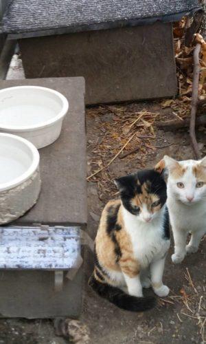 feral_cats_web