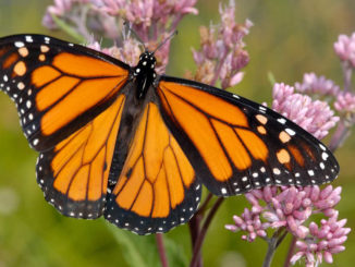 Butterfly on flower. Photo: iStocky by Getty.