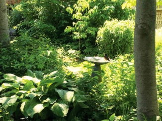 Mary's garden: can you see the robin? Photo by Debora Kuchme.