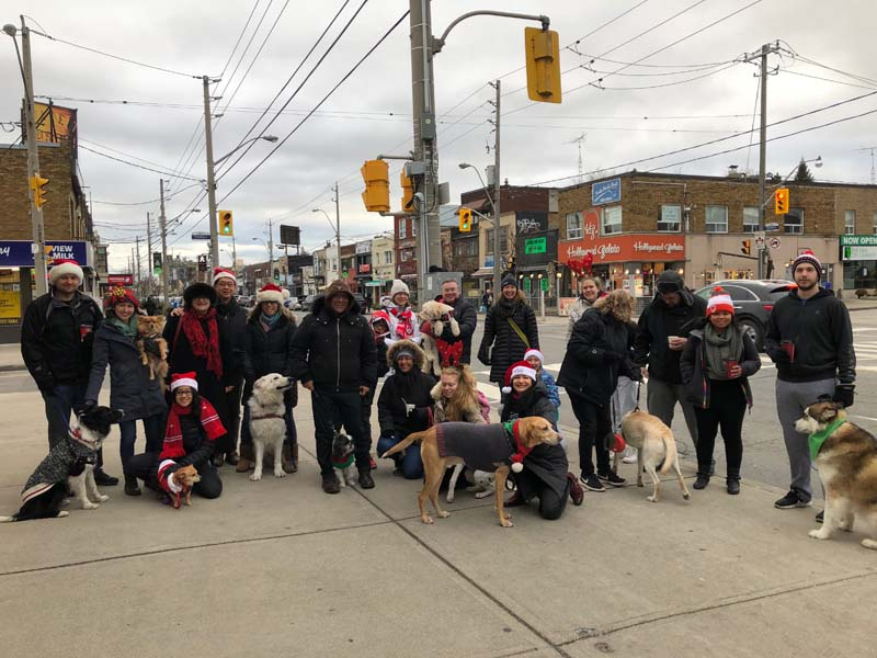 The whole pack on Bayview.