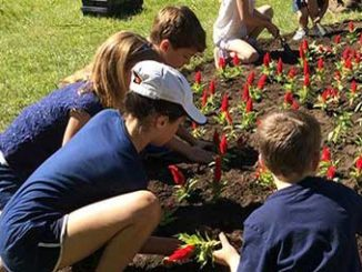 As part of their Grade 3 Science curriculum, students from St. Anselm Catholic School plant the flower bed in Father Caulfield Parkette. Photo by Janis Fertuck.
