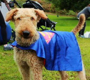 Super hero dog at BIST 5k.