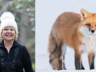 Left: Conlin at work. Photo by Daniel Vaughan. Right: Cindy's photo of a fox.