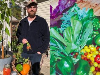 Meet Tim Davies: avid harvester! Photo Kathi Davies.