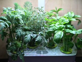 Hydroponic Unit garden.