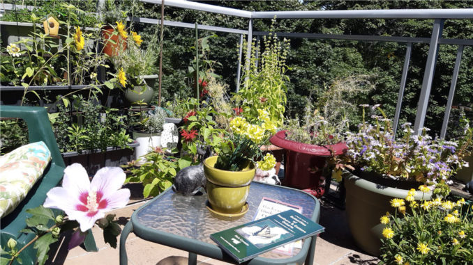 Jean Sugarbroad-Keele is a passion- ate and dedicated balcony gardener whose Leaside condo terrace is a true pollinator paradise. Photo Jean Sugarbroad-Keele.