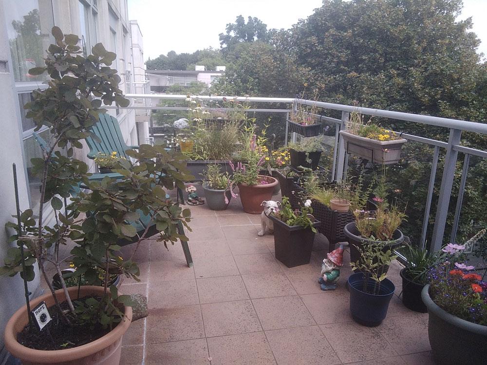 ean Sugarbroad Keele's balcony garden.