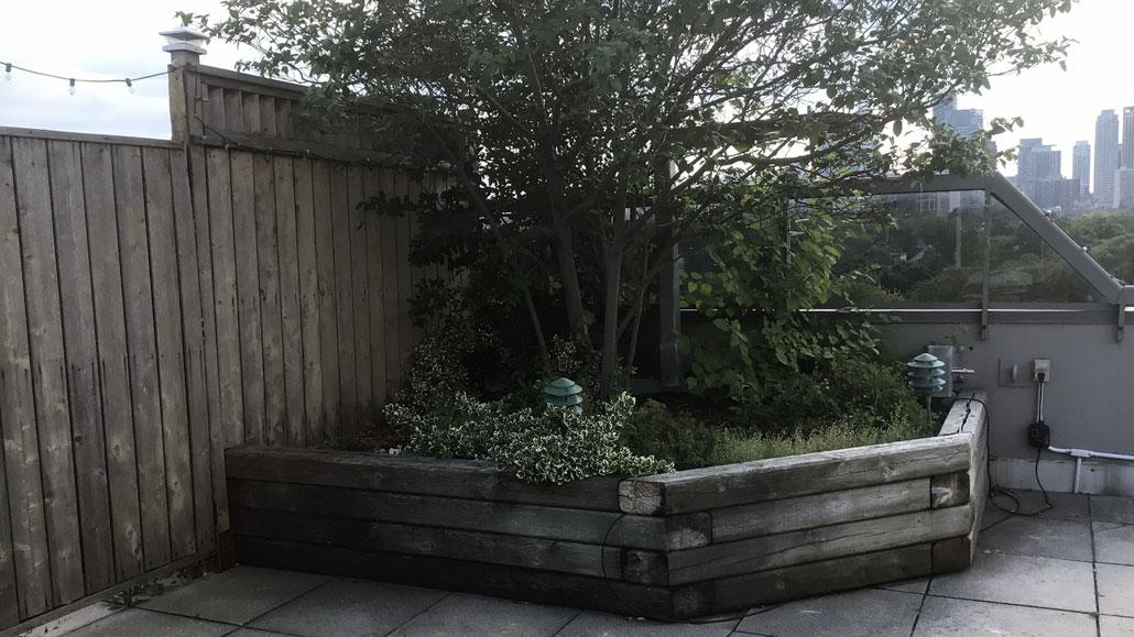 John Richards' garden.